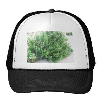 Rosemary plant trucker hat