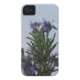Rosemary plant with flowers against the sky iPhone 4 Case-Mate case