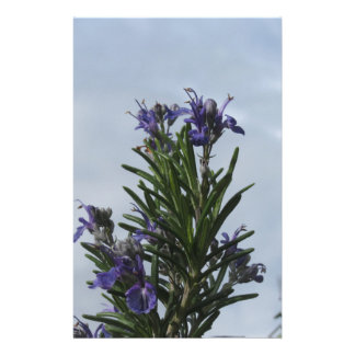 Rosemary plant with flowers against the sky stationery