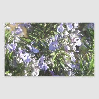 Rosemary plant with flowers in Tuscany, Italy Rectangular Sticker