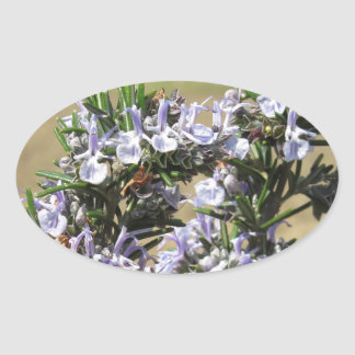 Rosemary plant with flowers oval sticker