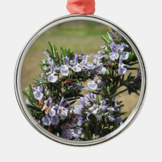 Rosemary plant with flowers round metal christmas ornament