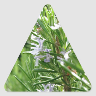 Rosemary plant with flowers triangle sticker