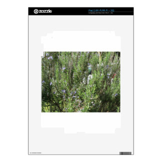 Rosemary plant with flowers . Tuscany, Italy Decal For iPad 2