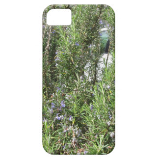 Rosemary plant with flowers . Tuscany, Italy iPhone SE/5/5s Case
