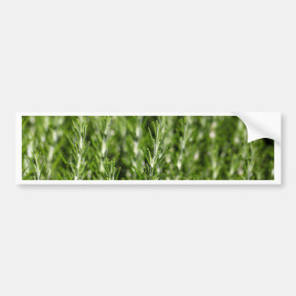 Rosemary (Rosmarinus officinalis) branches Bumper Sticker