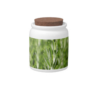 Rosemary (Rosmarinus officinalis) branches Candy Jar