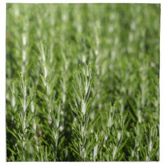 Rosemary (Rosmarinus officinalis) branches Cloth Napkin