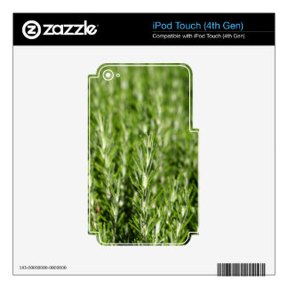 Rosemary (Rosmarinus officinalis) branches Decals For iPod Touch 4G