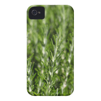 Rosemary (Rosmarinus officinalis) branches iPhone 4 Case