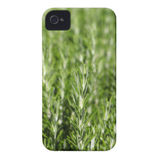 Rosemary (Rosmarinus officinalis) branches iPhone 4 Case-Mate Case