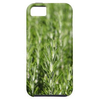 Rosemary (Rosmarinus officinalis) branches iPhone SE/5/5s Case