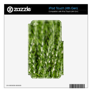 Rosemary (Rosmarinus officinalis) branches iPod Touch 4G Skin