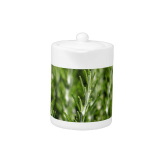 Rosemary (Rosmarinus officinalis) branches Teapot
