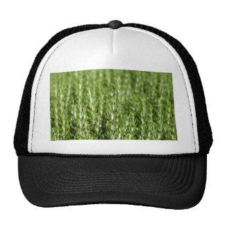 Rosemary (Rosmarinus officinalis) branches Trucker Hat