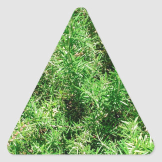 Rosemary Triangle Sticker