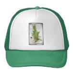 Rosemary Trucker Hats
