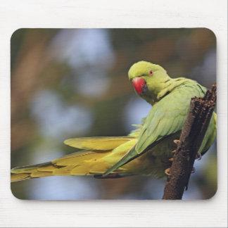 Roseringed Parakeet,Keoladeo National Park, Mousepads