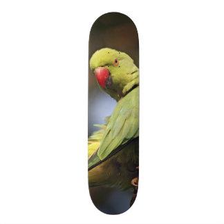 Roseringed Parakeet,Keoladeo National Park, Skateboard