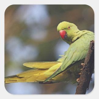 Roseringed Parakeet Keoladeo National Park Stickers