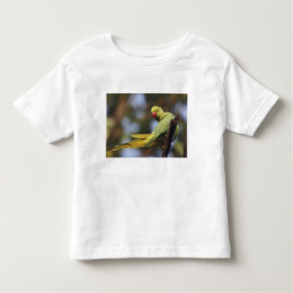 Roseringed Parakeet,Keoladeo National Park, Toddler T-shirt