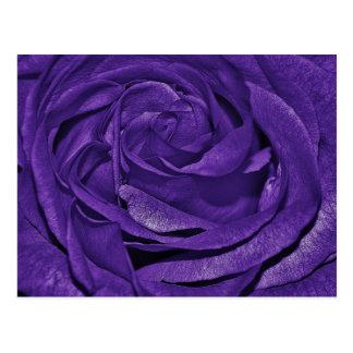 roses-320209 roses purple lila family rose family postcard