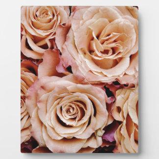 roses-366170 dusty light coral pink natural petals display plaque