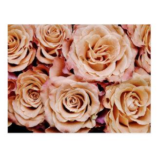 roses-366170 dusty light coral pink natural petals postcard