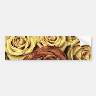 roses-66527 DRIED ROSES NEUTRAL CREAM YELLOW FLOWE Bumper Sticker