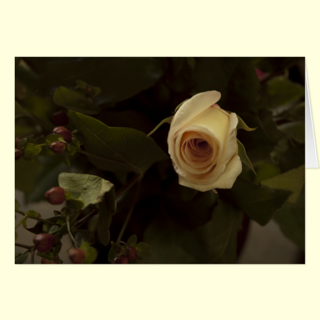 Roses and Berries - Pink Peace Rose Greeting Cards