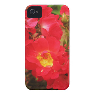 Roses and Raindrops iPhone 4 4s Case