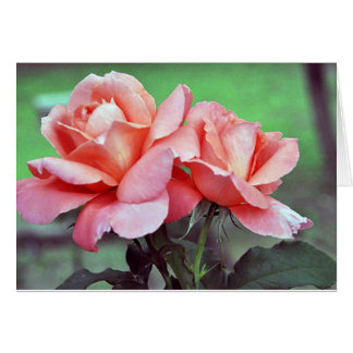 Roses are Beautiful Greeting Card