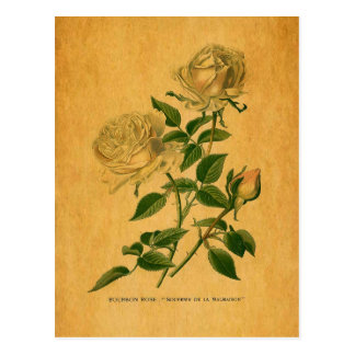 Roses are Golden Post Card