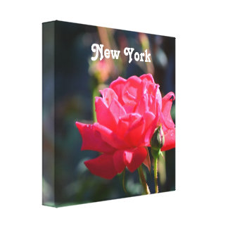 Roses are NY State Flower Canvas Print