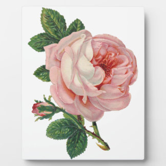 Roses are Pink Plaque