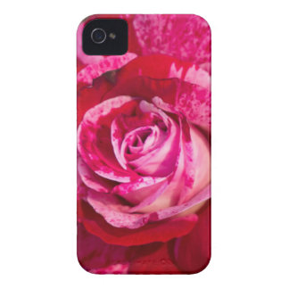 Roses Are Red iPhone 4 Case-Mate Case