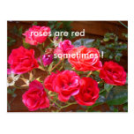 roses are red post cards