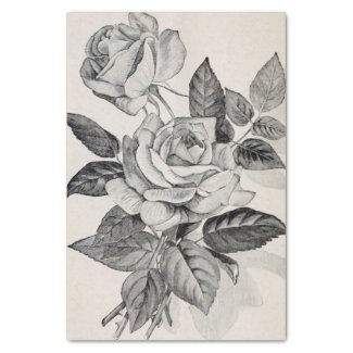 Roses Branch Antique Print 10