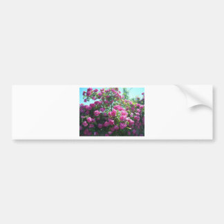 Roses Bumper Stickers
