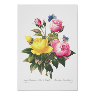 Roses by Pierre-Joseph Redouté Poster