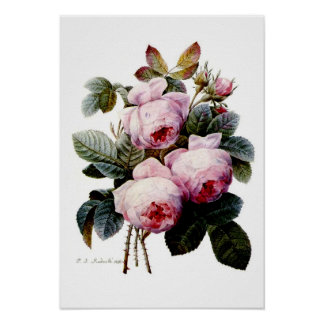 Roses by Redoute Poster