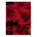 Roses flowers floral nature garden photo postcards