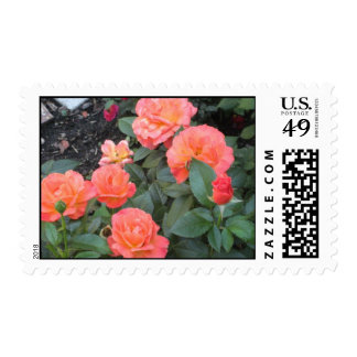 roses galore postage stamps