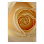Roses Greeting Cards