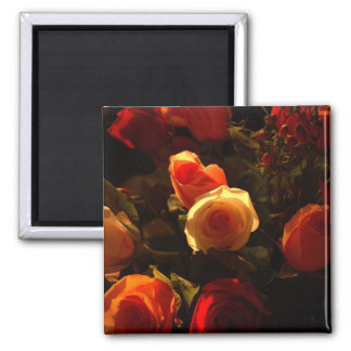 Roses I - Orange, Red and Gold Glory 2 Inch Square Magnet