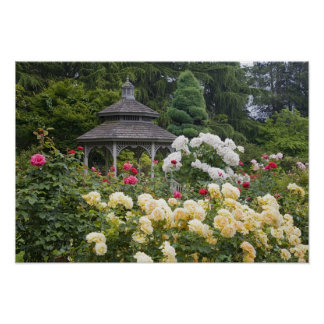 Roses in bloom and Gazebo Rose Garden at the Poster