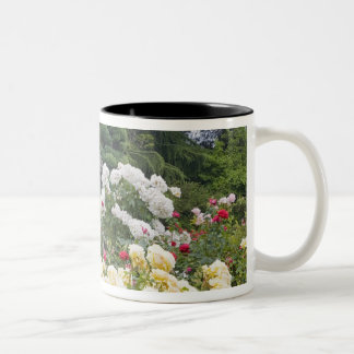 Roses in bloom and Gazebo Rose Garden at the Two-Tone Coffee Mug