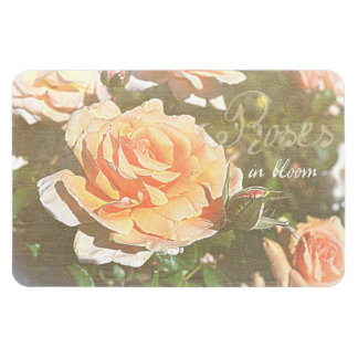 Roses in Bloom Magnet