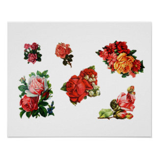 Roses in Bloom Poster