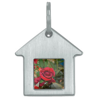 roses in bouquet pet tag